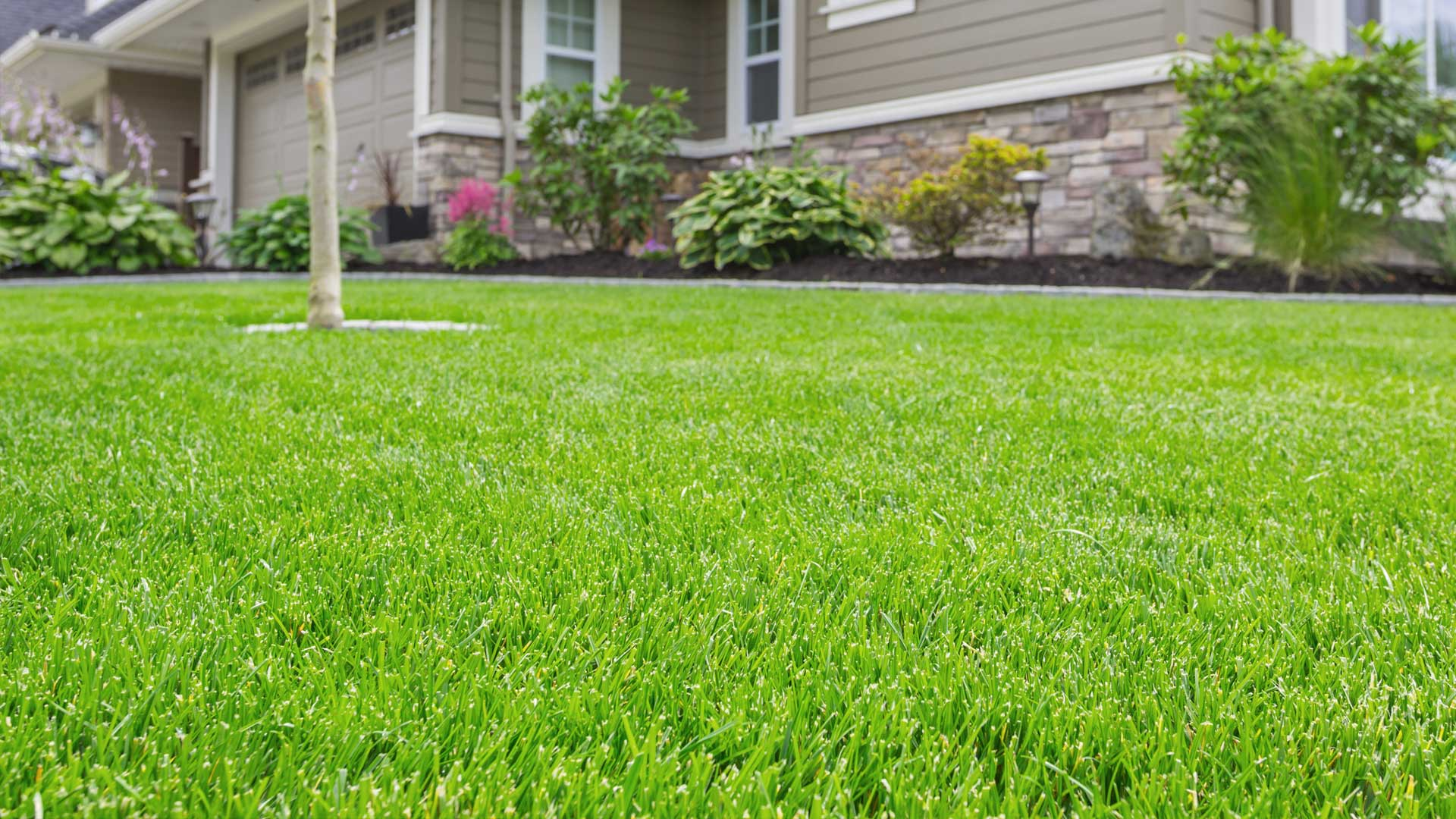 Mowing and maintenance of a property in Thornton, CO.