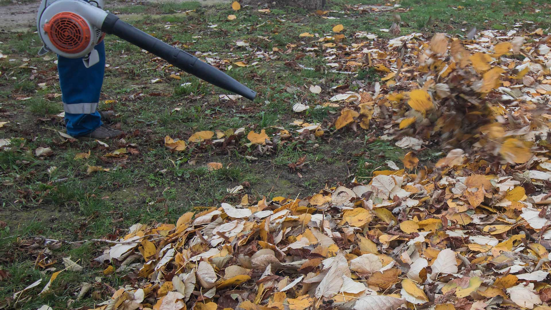 Residential fall yard clean up in Northglenn, CO.