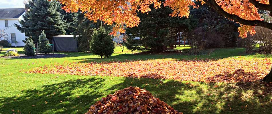 Yard cleanup services with fall leaves raked into a pile at a home in Northglenn, CO