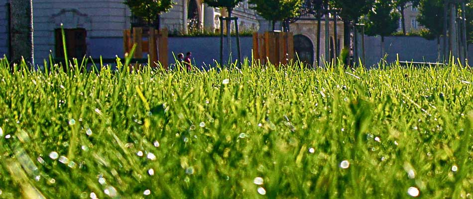 Green healthy lawn in Northglenn fertilized by Down to Earth.